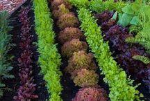Greenhouse / Kjøkkenhage