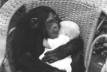 my future pet monkey