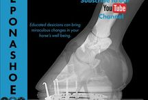 Horse & Hoof Videos / A collection of videos from our channel and the web. Subscribe to the EponaShoe YouTube channel to view them all!