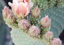 DIY - Sukkulenten und Kakteen   succulent and cacti / du bist ein wahrer Pflanzenfreund und liebst sukkulenten und Kakteen? Dann herzlich willkommen im Club! hier findest du viele tolle Ideen rund um unsere Lieblings Pflanzen
