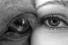 HORSES - my love