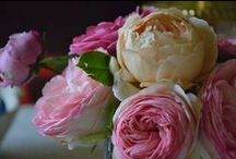 Rose - Roses / Le rose di Cà Bianca dell'Abbadessa