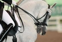 Dressage / All things dressage