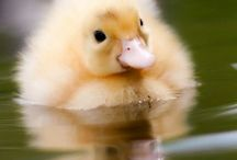 Cute Pets / Animals