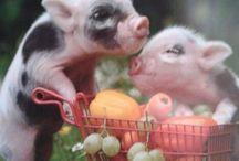 Cute Piggies / pigs
