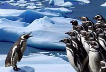 Penguins / Love this animals!