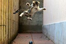 Inspiration // Ninja Kittens / Kittens, martial arts cats, gin and coffee.
