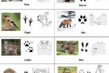 Djur och Natur