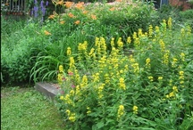 It's All About the Flower Garden / Gardens are wonderfully inspiring places.  Here's a look at mine..