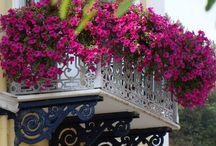Terrazas,balcones y porches / Mira arriba!!