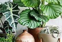 Indoor Plants / Unique ways to grow indoor plants and use them as beautiful decor in every room. Find the best plants for various lighting conditions in the home.