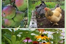 Sustainable Gardens / Beautiful flora...with purpose!