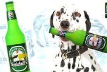 Lahváč pivka pro psa / Pivní láhve, víno nebo šampaňské - originální pískací hračky pro psy všech velikostí! Až si dáte sklenku svého oblíbeného nápoje, vzpomeňte si také na svého nejlepšího přítele a dopřejte mu zábavu s jeho vlastní lahvinkou. Dokonalá imitace známých značek piva či vína potěší vás i vašeho pejska. Tato hračka je replikuje láhev velmi luxusního šampaňského Cristal Champagne. Tyto zábavné pískací hračky jsou vyrobeny z nové odolné pryže vysoké kvality, která je měkká a zdravotně nezávadná.