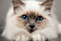 Katten /