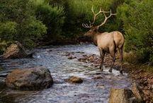Natuur/wildlife /