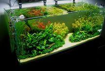 Garden  / Hage og undervannshage