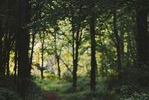 Forest / Wald in seiner Schönheit