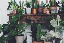 Plants | Cacti | Succulents / Plants • Flowers • Indoor Plants • Cacti • Succulents • Outdoor Plants • Flower Displays