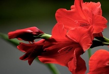Flowers & Gardens / I just love flowers / by Debbie Crew-Johnson