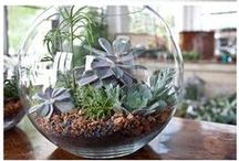 Succulent Terrariums & Other Plant Related Stuff / Cute and adorable succulent terrariums (also DIY versions), marimo moss balls, orchids, cacti etc.