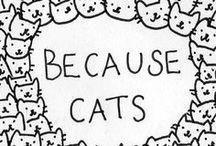 Cats  / by Emily Regier