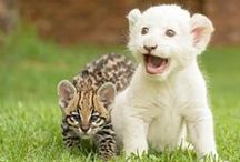 Baby Animals  / by Emily Regier