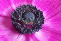 flowers :-)