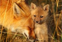 Animals / The most beautiful, wonderful creatures on our planet