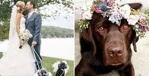 Paws at the Wedding / As if the world of weddings isn't heart-warming enough, here are couples that got their furry (or feathered) pals to assist in proposals and play a part in their special day!
