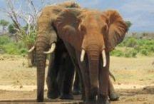 Kenya & Safari