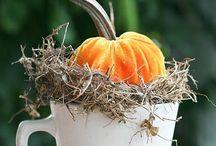 Halloween & Automne