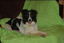 Foster dogs / Dogs that we have fostered and loved!