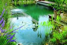 Natural Swimming Pools/Ponds