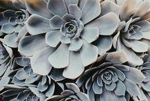 GARDEN GLORY / how does your garden grow?