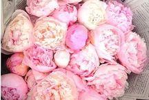 BLOOMING JOY / beautiful flowers
