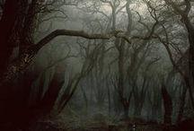 DEEP FOREST / mystical. peaceful.