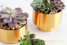 Plants and home decor