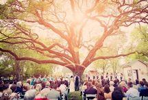 Weddings. / by Kaylee Burger