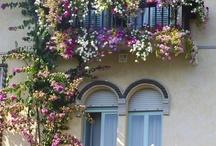 Windows & Balconys / by Gerry Mangos