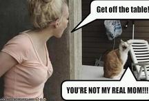 Krazy for Kats