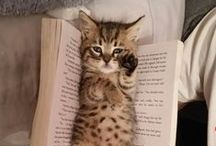 Cats, Kittens, Gatos, Felines, Kitty Cat ... / Meow!