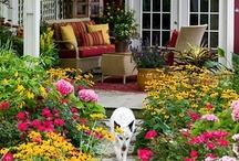Gardening and Flowers / by Wren Tidwell
