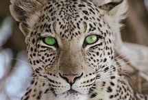 Animals - God's creatures / by Wren Tidwell