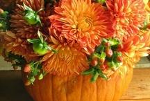 Fall Decorations / by Wren Tidwell
