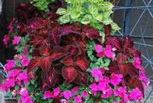 Container Gardening / by Wren Tidwell