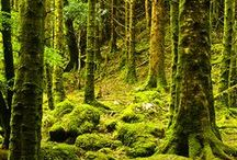 The Forest of Kithira / Forest setting inspiration for Inharmonic, book one in The Music Maker series.