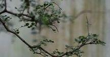 FLOWERS Industrial Prints / Wabi sabi flowers and plants. | wabi sabi, plants, flowers,  steampunk prints, industrial decor, industrial painting, rustic decor, vintage decor, wall art. 10% off at industrialprints.com today!