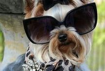 Pampered Pets: Dogs & Puppies 2 / by Anntoinette McFadden