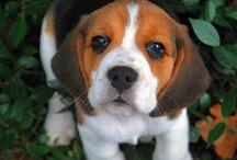 Mascotas y otros animales