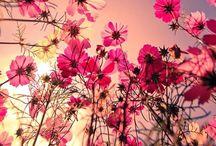 Joy : Flowers  / by Joyce